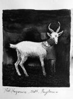 Katarzyna Karpowicz: Goat